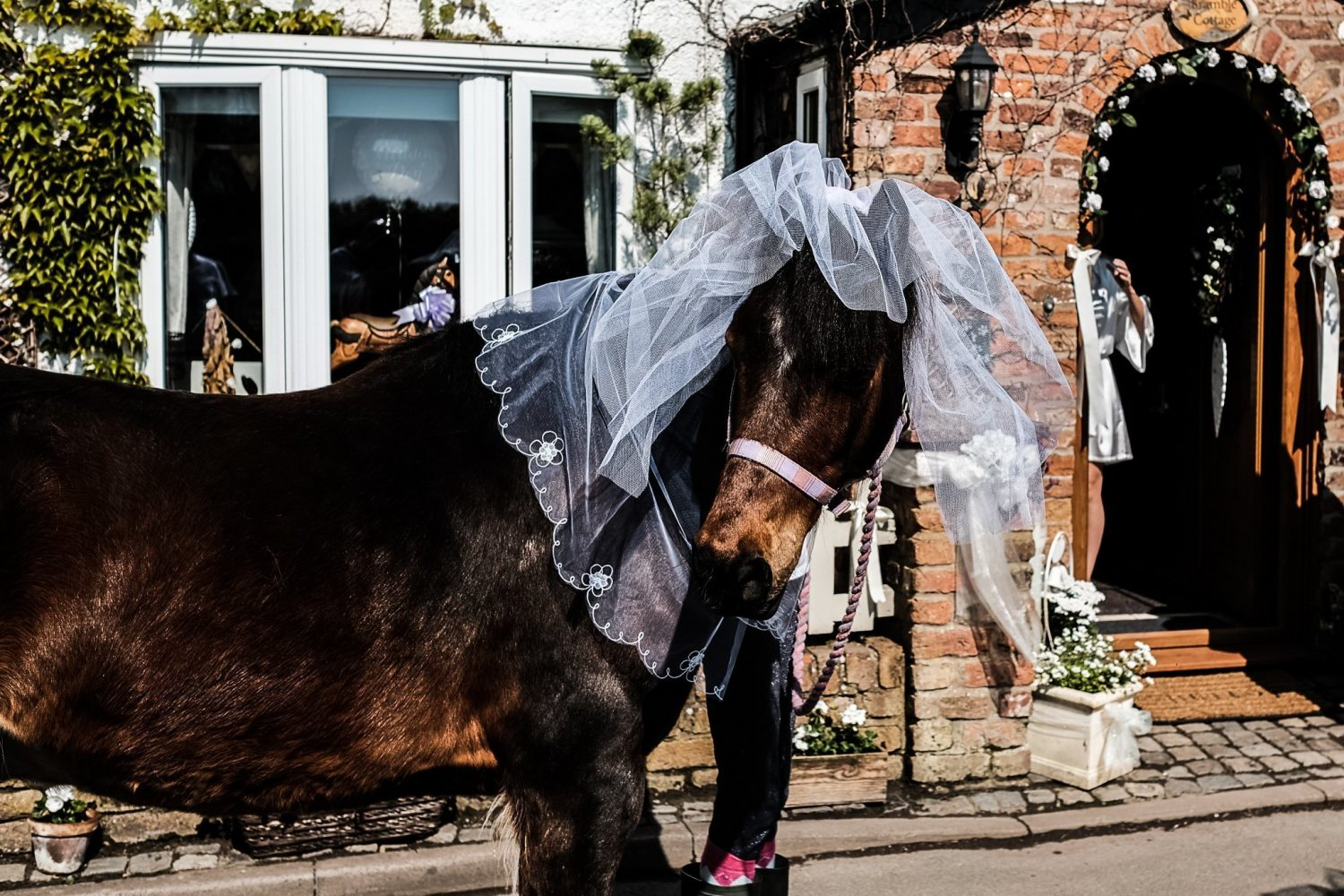 horse wearing a vale taken by Liverpool wedding Photographer Gavin Alexander